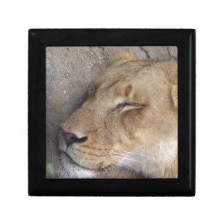Boîte À Souvenirs Lionne de sommeil