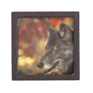 Boîte À Souvenirs Loup 2