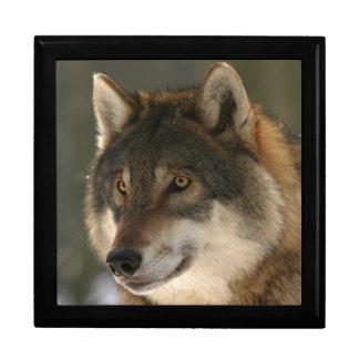 Boîte À Souvenirs Loup européen