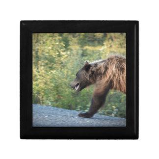 Boîte À Souvenirs L'ours gris le Yukon, Canada attaque, des