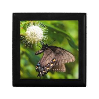 Boîte À Souvenirs Machaon femelle foncé de tigre sur le fleur