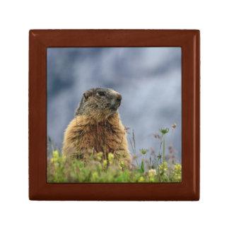Boîte À Souvenirs marmotte sur le pré alpin