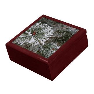 Boîte À Souvenirs Nouveaux cônes de pin