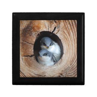 Boîte À Souvenirs Oiseaux de bébé