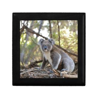 Boîte À Souvenirs Ours de koala gris et blanc