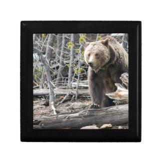 Boîte À Souvenirs Ours gris en parc national Etats-Unis de