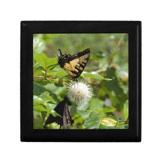 Boîte À Souvenirs Papillon de machaon de tigre sur le fleur sauvage