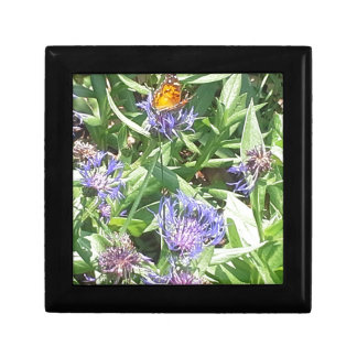 Boîte À Souvenirs Papillon sur Coneflower pourpre
