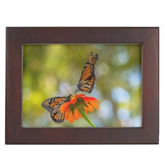 Boîte À Souvenirs Papillons de monarque sur des fleurs sauvages