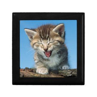 Boîte À Souvenirs Petit chaton dans un arbre
