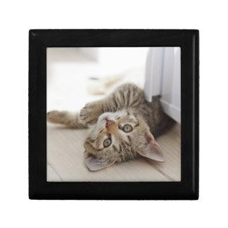 Boîte À Souvenirs Petit chaton mignon
