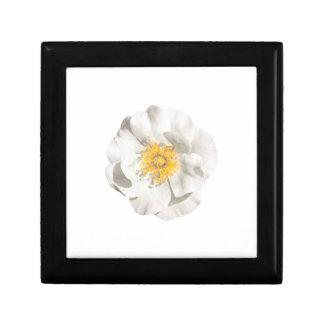 Boîte À Souvenirs Photo de fleur blanche