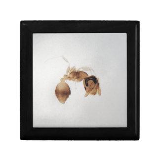 Boîte À Souvenirs Photo de microscope d'une fourmi
