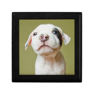 Boîte À Souvenirs Pitbull avec l'oeil repéré par noir