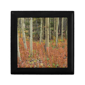 Boîte À Souvenirs Plancher coloré de forêt d'Aspen