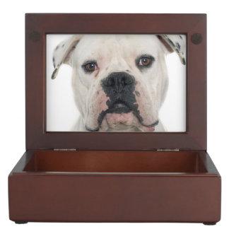Boîte À Souvenirs Portrait américain de bouledogue