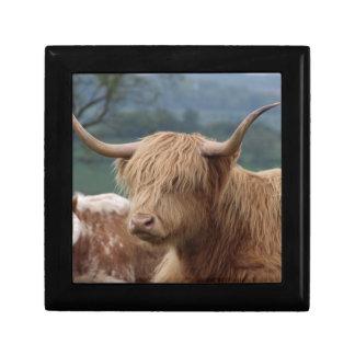 Boîte À Souvenirs portrait des bétail des montagnes