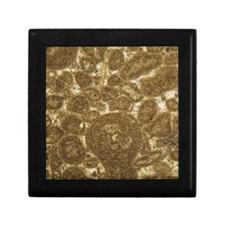 Boîte À Souvenirs Section mince de chaux paléozoïque sous la MICR