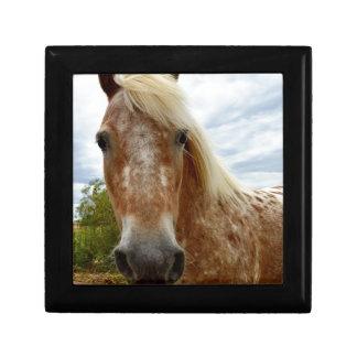 Boîte À Souvenirs Sucrez le cheval d'Appaloosa, _