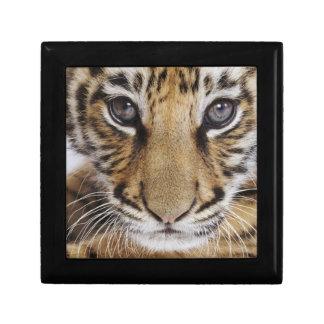 Boîte À Souvenirs Tigre CUB