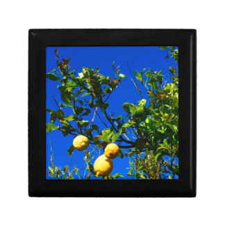 Boîte À Souvenirs Trois citrons siciliens