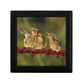 Boîte À Souvenirs Trois oiseaux de Schach de Lanius de bébé