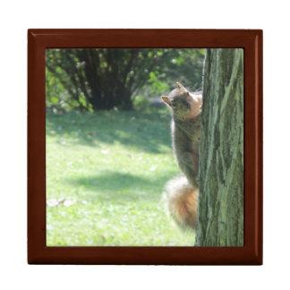 Boîte À Souvenirs Un écureuil à la boîte-cadeau de parc