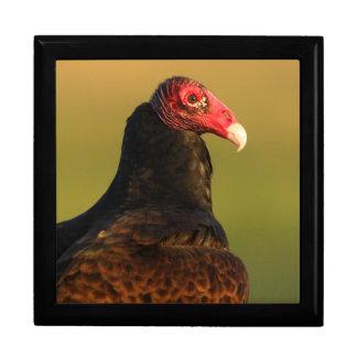 Boîte À Souvenirs vautour de dinde