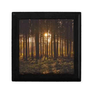 Boîte À Souvenirs Vue des arbres noirs et du Sun