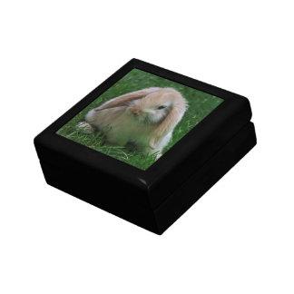 Boîte-cadeau de Wascally Wabbit Boîte À Souvenirs