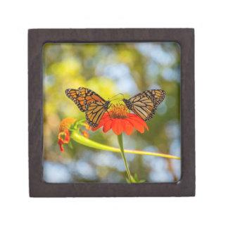 Boîtes À Babioles De Première Qualité Papillons de monarque sur des fleurs sauvages