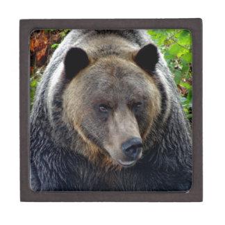 Boîtes À Babioles De Première Qualité Plan rapproché d'ours gris