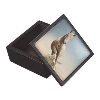 Boîtes À Souvenirs De Première Qualité Cheval d'Akhal-Teke