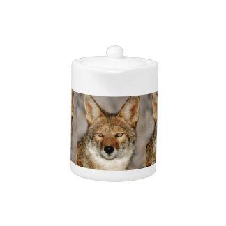 boîtes de coyotes