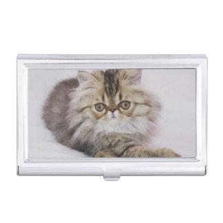 Boîtier Pour Cartes De Visite Chat persan, catus de Felis, chat tigré de Brown,