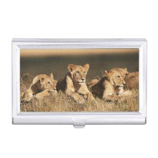Boîtier Pour Cartes De Visite Fierté de jeunes lions masculins