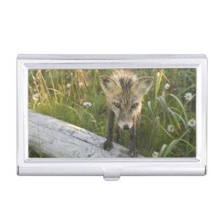 Boîtier Pour Cartes De Visite Fox rouge, fulva de Vulpes sur le rondin, fleurs