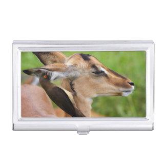 Boîtier Pour Cartes De Visite Jeune d'impala (Aepyceros Malampus)