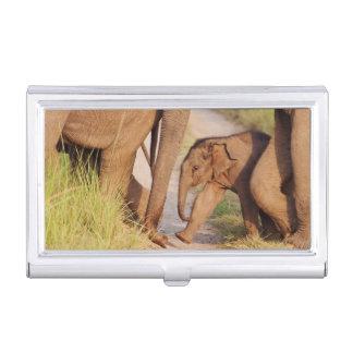 Boîtier Pour Cartes De Visite Jeunes un d'éléphant asiatique indien
