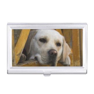 Boîtier Pour Cartes De Visite Labrador retriever blond, Patagonia, Chili