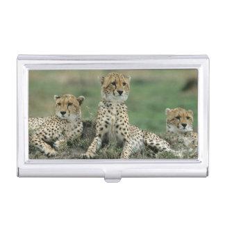 Boîtier Pour Cartes De Visite L'Afrique, Kenya, guépards