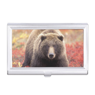 Boîtier Pour Cartes De Visite Les Etats-Unis, Alaska, Denali NP, ours gris