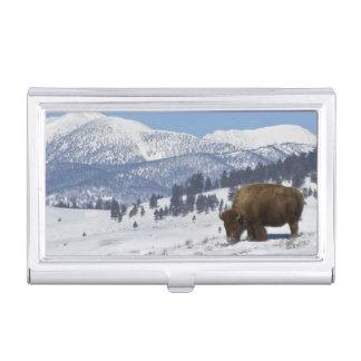 Boîtier Pour Cartes De Visite Les Etats-Unis, WY, Yellowstone NP, bison de bison