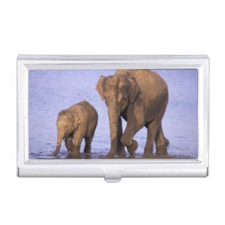 Boîtier Pour Cartes De Visite L'Inde, parc national de Nagarhole. Éléphant