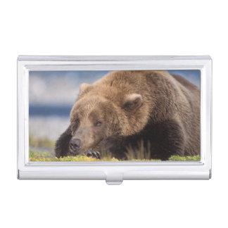 Boîtier Pour Cartes De Visite ours brun, arctos d'Ursus, ours gris, Ursus 8