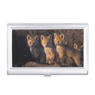 Boîtier Pour Cartes De Visite renard rouge, vulpes de Vulpes, kits en dehors de