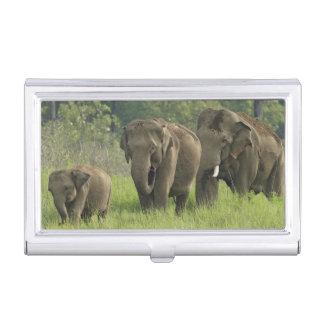 Boîtier Pour Cartes De Visite Sortir de famille d'éléphant d'Asie