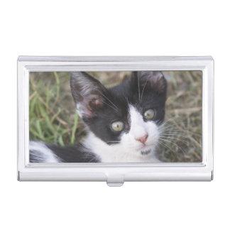 Boîtier Pour Cartes De Visite Un chaton noir et blanc de chat dans le jardin