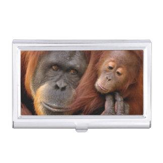 Boîtier Pour Cartes De Visite Un orang-outan de mère et de bébé partagent une
