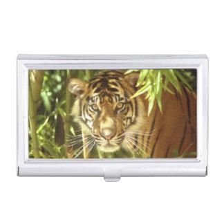 Boîtier Pour Cartes De Visite Zoo de la Californie, San Francisco, tigre de